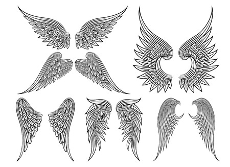 wings isolated: Vector heraldic wings or angel Illustration
