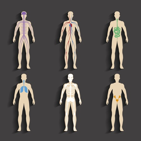 human icons: Human organs and body systems