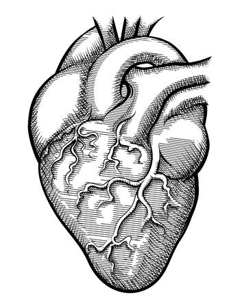human vein heartbeat: Vector human heart Illustration