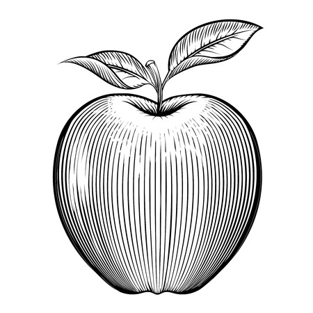 food backgrounds: Vector engraving apple