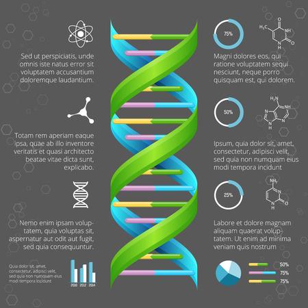 biotecnologia: Infografía plantilla con la estructura del ADN para la investigación médica y biológica