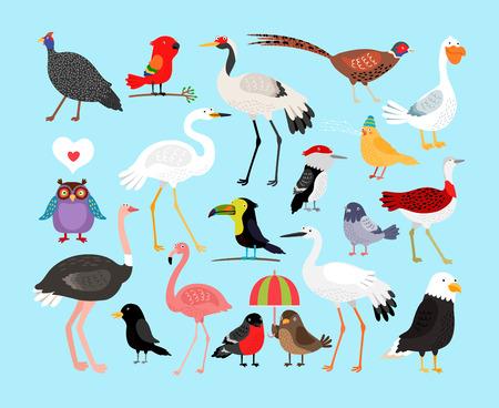 cuervo: P�jaros lindos del vector