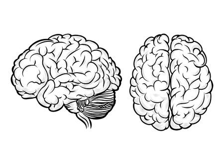 cerebro blanco y negro: Vector cerebro humano Vectores