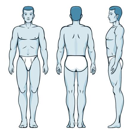 남자 바디 모델. 앞, 뒷면과 측면 인간의 포즈 일러스트