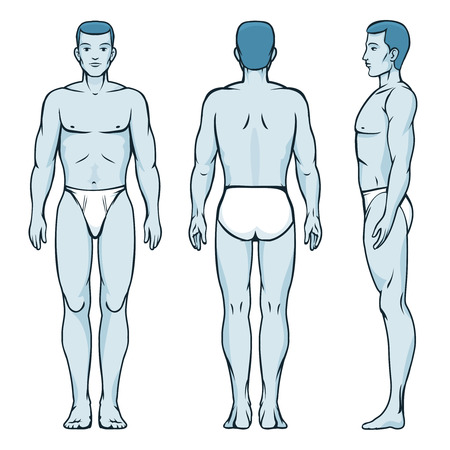 from side: Man body model. Front, back and side human poses Illustration