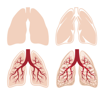 inhale: Human lungs vector. Anatomy and organ, respiratory and breathe, bronchi and vessel