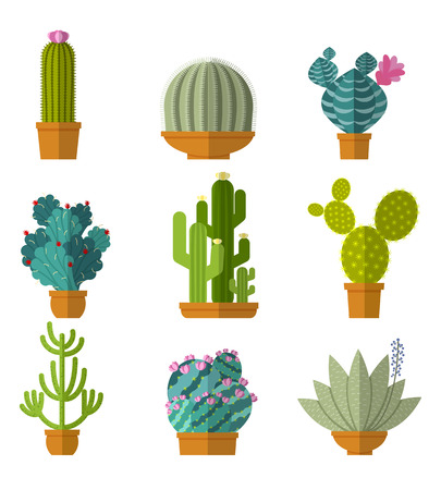 wild botany: Vector collection of cactus in flat style. Green plant, flower and nature,  floral and exotic, wild botany tropical illustration