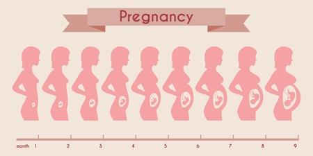 feto: El crecimiento del feto humano con la silueta femenina en semanas y meses. Feto y trimestre, línea de tiempo y el bebé, vientre y fetal, ilustración vectorial Vectores