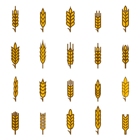Ears of wheat bread symbols. Organic and bread, agriculture seed, plant and food, natural eat. Vector illustration Vettoriali