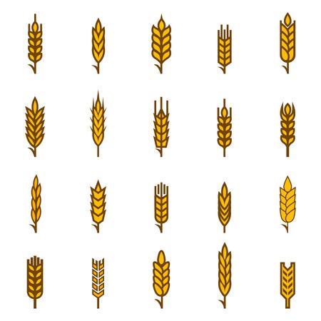 cosecha de trigo: Orejas de s�mbolos pan de trigo. Org�nica y el pan, la agricultura de semillas, plantas y alimentos, comer natural. Ilustraci�n vectorial