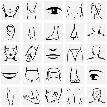 Pièces de corps masculins icons set. Bras et pieds, les jambes et le torse, du coude et de la cheville, du poignet et des doigts, les yeux et le nez, illustration vectorielle