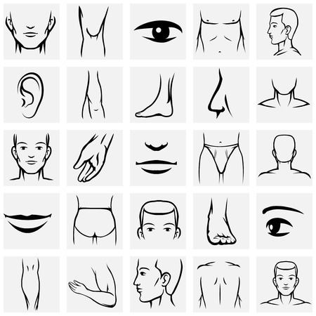 Male body parts icons set. Arm and foot, leg and torso, elbow and ankle, wrist and finger, eye and nose, vector illustration Illustration