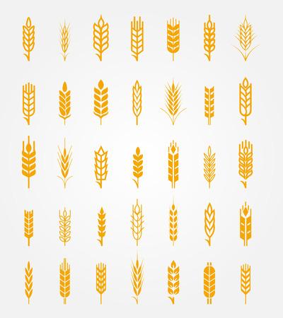 Vector oídos del trigo iconos conjunto. Oído y trigo orgánico, la agricultura pan, semillas y plantas, comer naturales Ilustración de vector