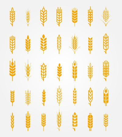ears: Vector wheat ears icons set. Ear and organic wheat, bread agriculture, seed and plant, natural eat
