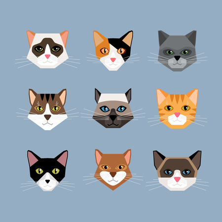 kitten cartoon: Set of cats heads in flat style. Face kitten, whiskers and ears, muzzle and wool. Vector illustration
