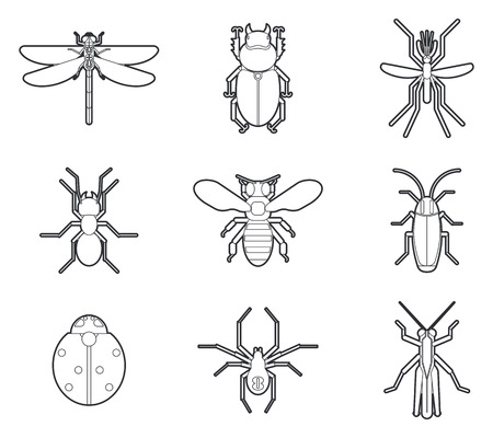 tarantula: Insects mono line icons vector set. Ant cockroach mosquito ladybug spider tarantula illustration