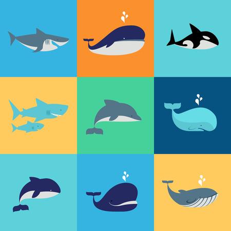tiburon caricatura: Vector conjunto de ballenas, delfines y tiburones iconos. Grampus y fuente, bajo el agua y la naturaleza Vectores