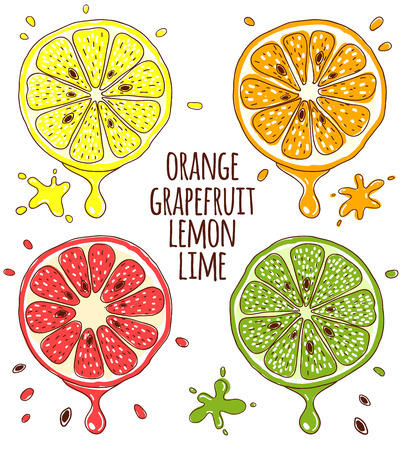 lime: Fresh fruits slices. Lemon and lime, orange and grapefruit. Vitamin healthy, juicy natural, tropical sweet. Vector illustration