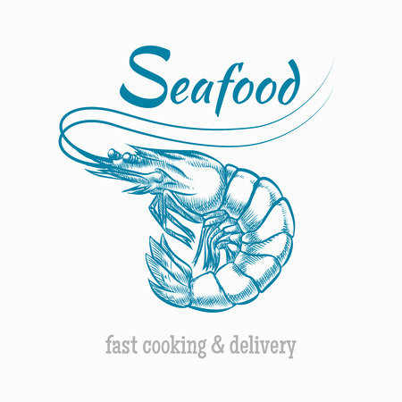 Vector sketch shrimp seafood. Sketch animal, restaurant and prawn illustration