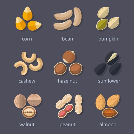 semilla: Frutos secos y semillas conjunto de iconos. Almendra y nuez, cacahuete y calabaza, maíz y frijol. Ilustración vectorial