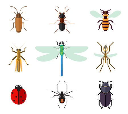 dragonfly wings: Icon set of insects in flat style. Cockroach ant ladybug bee mosquito dragonfly grasshopper spider beetle, vector illustration Illustration