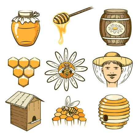 the bee: Apicultura, miel y abejas iconos del vector dibujado a mano. Comida dulce, insectos y células, barrica y panal ilustración