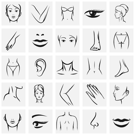 nude ass: Female body parts icons set. Femininity fashion contour beauty, knee and ass, hand and foot, lip and mouth, vector illustration
