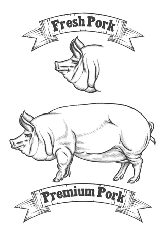 Premium pork meat vector label, butcher emblems or icon. Fresh pig, badge for restaurant, product butchery illustration