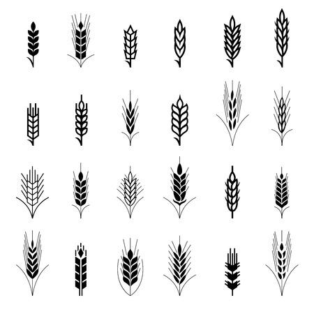 symbol: Simboli spiga di grano per il design delle icone. Agricoltura grano, pianta organica, cibo pane, raccolta naturale, illustrazione vettoriale Vettoriali