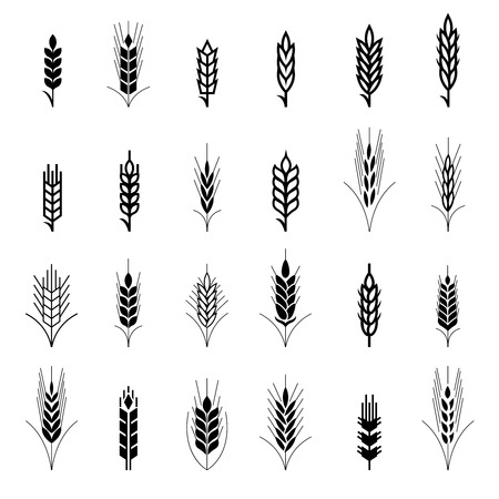 grains: Wheat ear symbols for icon design. Agriculture grain, organic plant, bread food, natural harvest, vector illustration Illustration