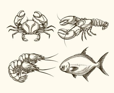 dessin au trait: Vecteur de fruits de mer dans le style dessiné à la main. Crabe océan, vintage cancer, poissons illustration