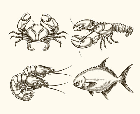gourmet illustration: Vector seafood in hand drawn style. Ocean crab, cancer vintage, fish illustration