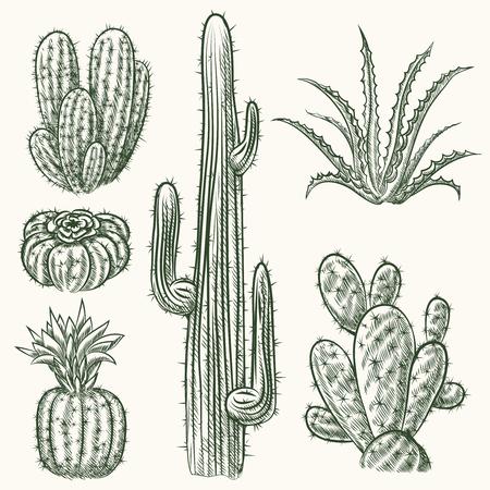 caricatura mexicana: Conjunto de la mano de cactus vector dibujado. Planta de la naturaleza mexicana, flora ex�tica ilustraci�n Vectores