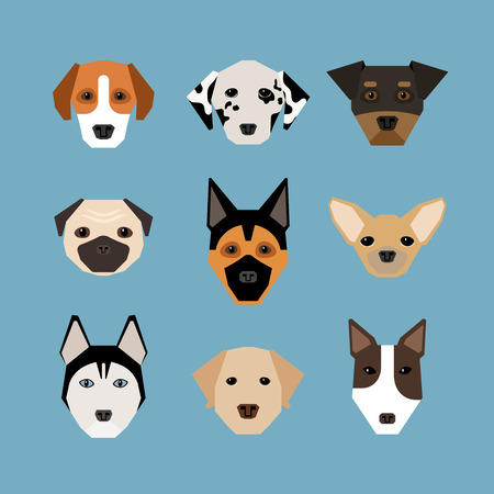 dog group: Dogs in flat style. Pet and pedigree, watchdog and dalmatians, shepherd and pug, vector illustration