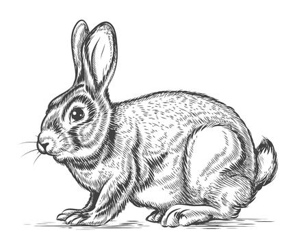 lapin silhouette: Tiré par la main de lapin vecteur dans le style de gravure. Lapin et le lièvre, la conception vintage de croquis, illustrations Illustration