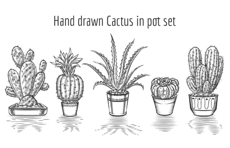 hand in hand: Beauty cacti. Hand drawn cactus in pot set. Plant art graphic, element floral houseplant. Vector illustration