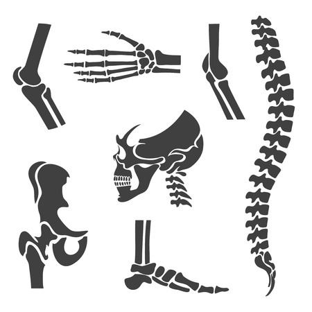columna vertebral: Articulaciones Humanos conjunto de vectores. Símbolos ortopédicos y la columna vertebral. Codo y la rodilla, la muñeca y la rehabilitación, la mano y la ilustración columna vertebral