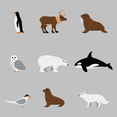 Arctic and antarctic animals set in flat vector style. Penguin and orca, owl and bear, walrus and deer illustration Illustration