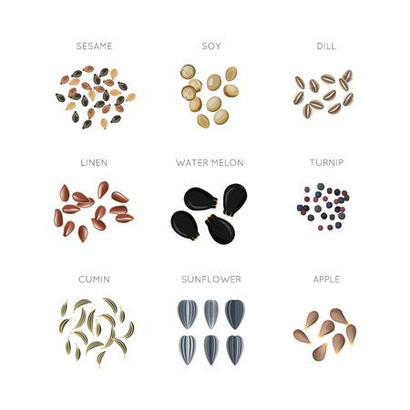 植物の種子フラット ベクトルのアイコンを設定。ひまわりリネン クミン アップル カブ ディル、水メロン イラスト