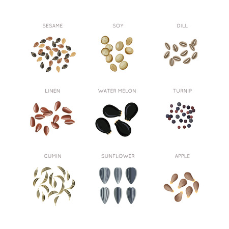 Plant seed flat vector icons set. Sunflower linen cumin apple turnip dill and water melon illustration Vettoriali