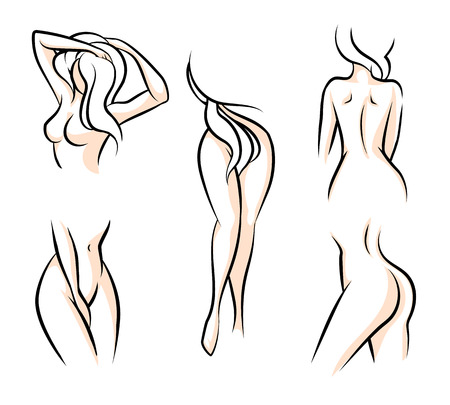nude female buttocks: Female body parts. Waist attractive woman, hip naked, human model, vector illustration