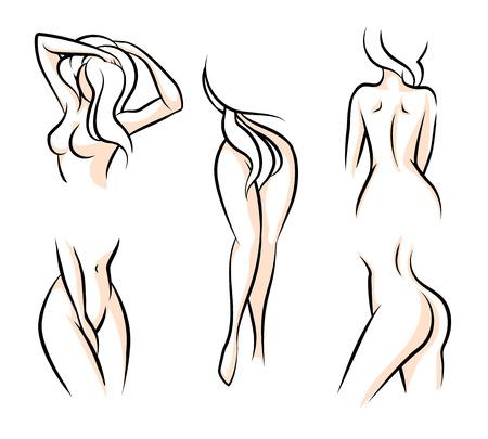 sexo femenino: Partes del cuerpo femenino. Cintura atractiva mujer, cadera desnuda, modelo humano, ilustración vectorial