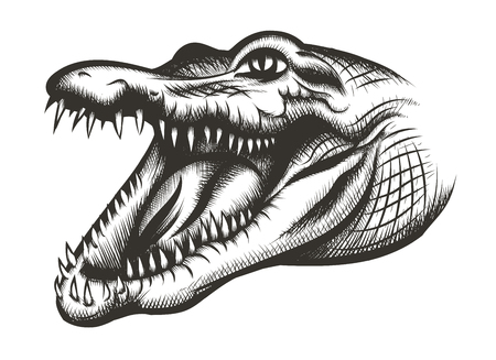 crocodile skin: Crocodile head black. Animal reptile, wild predator, mouth and wildlife, teeth dangerous, illustration