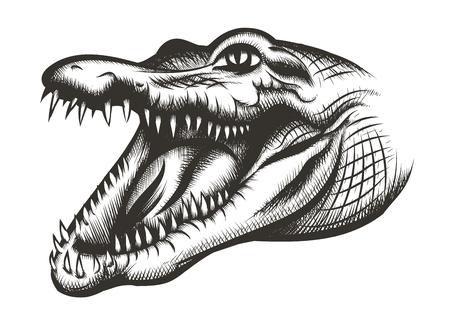 cocodrilo: Negro Cabeza de cocodrilo. Reptil animal, depredador salvaje, la boca y la vida silvestre, los dientes peligrosos, ilustraci�n