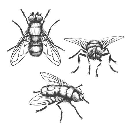 volar: Mano moscas dibujados. Insectos con alas, biología y dibujo, ilustración vectorial