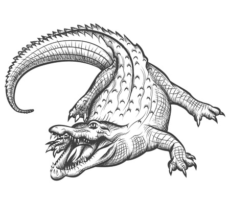 animal mouth: Hand drawn crocodile. Alligator animal, predator reptile with open mouth, vector illustration Illustration