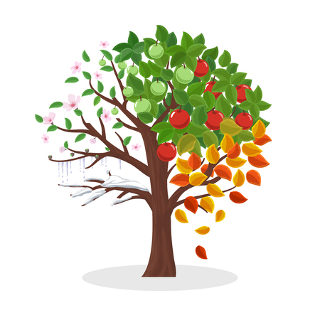 apfelbaum: Jahreszeiten-Baum. Frühling Sommer Herbst und Winter, Blattpflanze, Schnee und Blumen, Vektor-Illustration