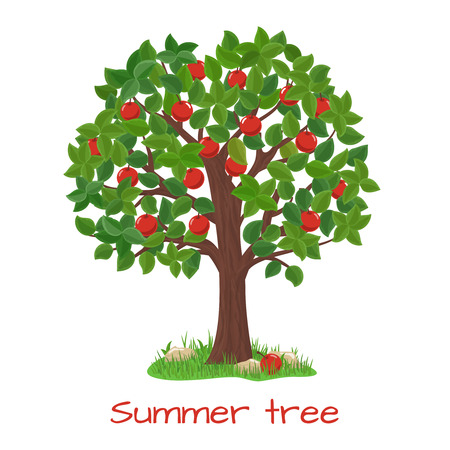 apfelbaum: Grüne Apfelbaum. Sommer-Baum. Naturgarten, Ernte und Zweig, Vektor-Illustration