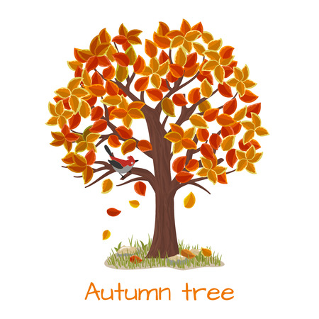 Autumn tree. Nature tree, season fall and branch plant, vector illustration Illustration