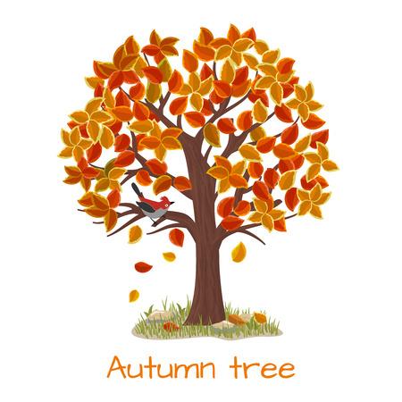 autumn tree: Autumn tree. Nature tree, season fall and branch plant, vector illustration Illustration